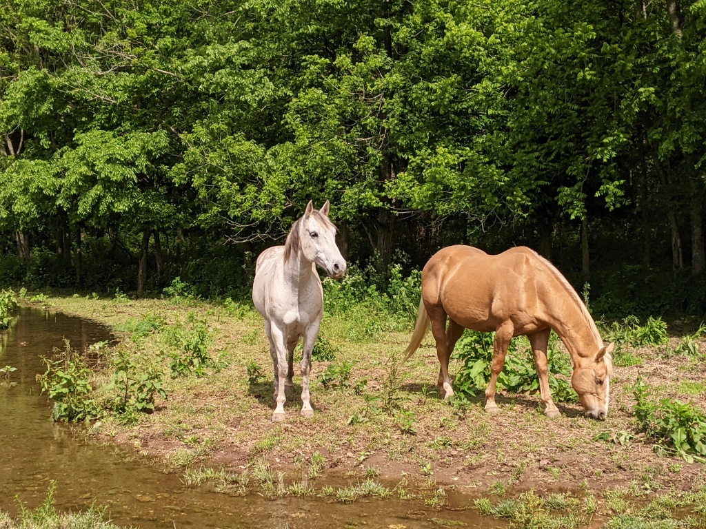 Horses at Dogwood Ranch.